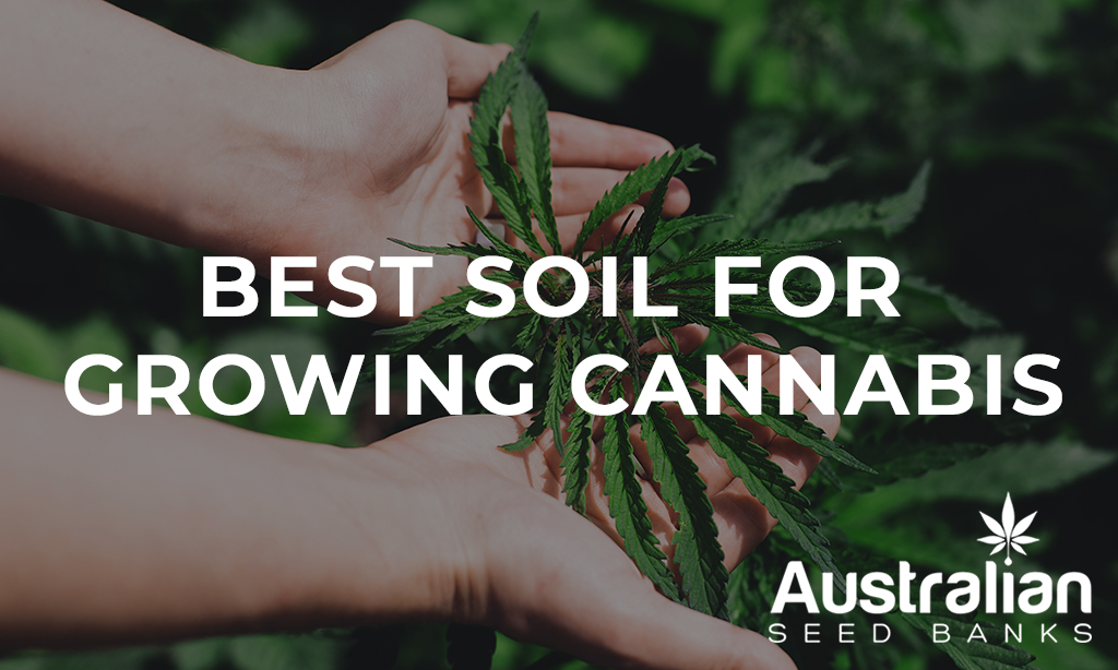 Best Soil for Growing Cannabis