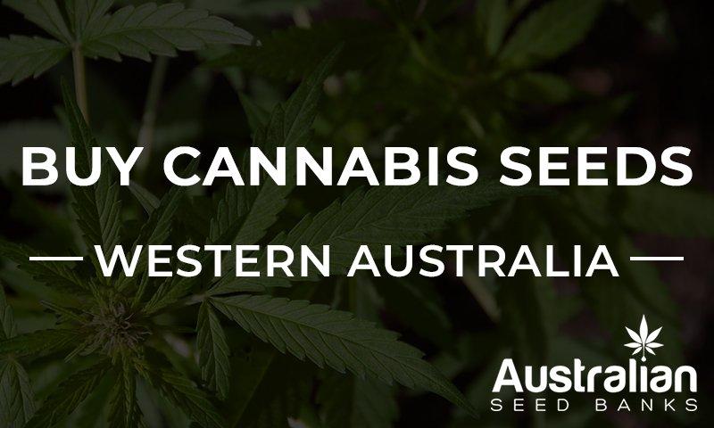Cannabis seeds in western Australia banner