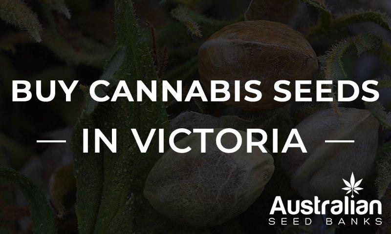 Cannabis seeds in Victoria banner