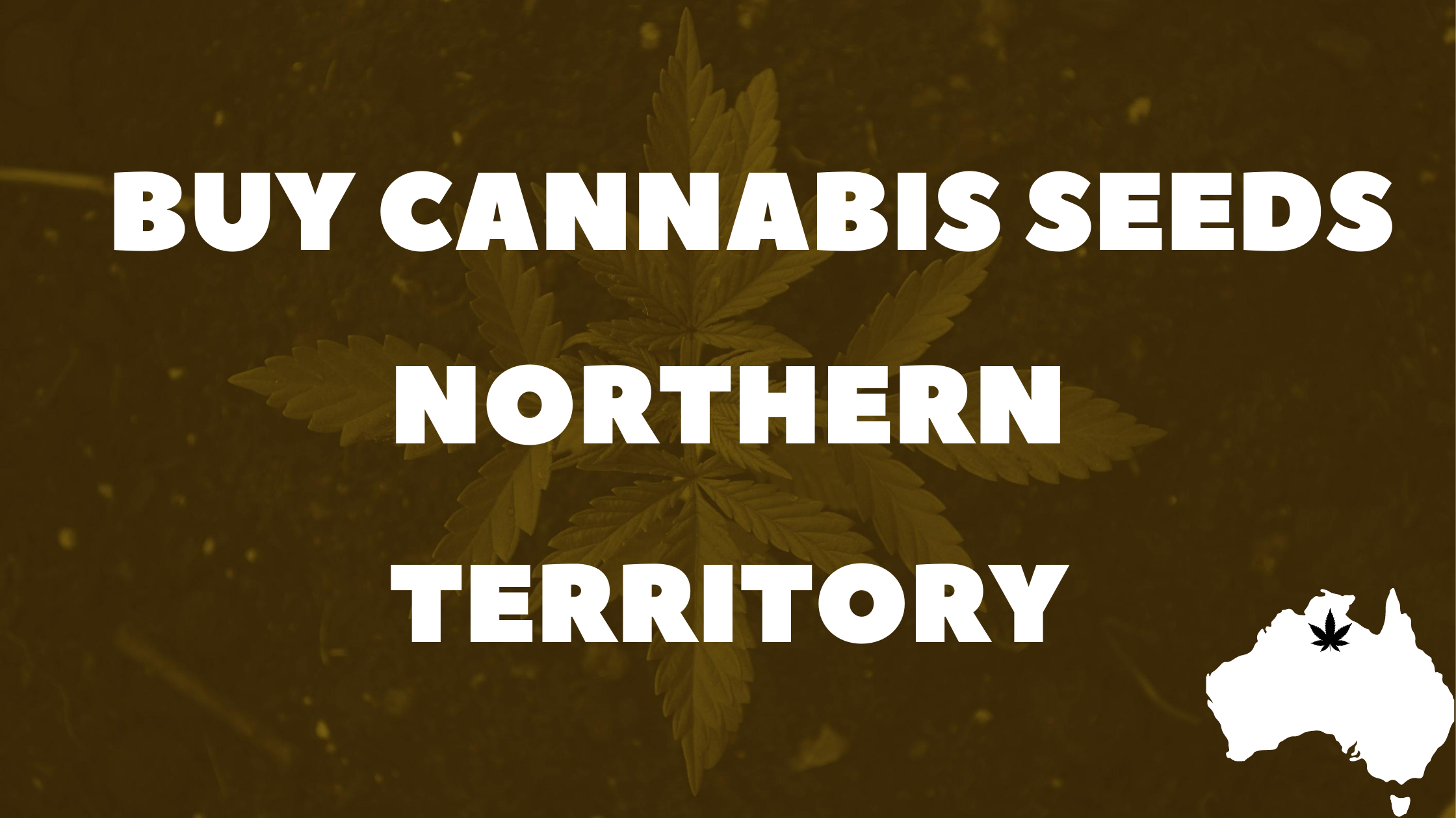 Buy-Cannabis-Northern-Territory-Banner